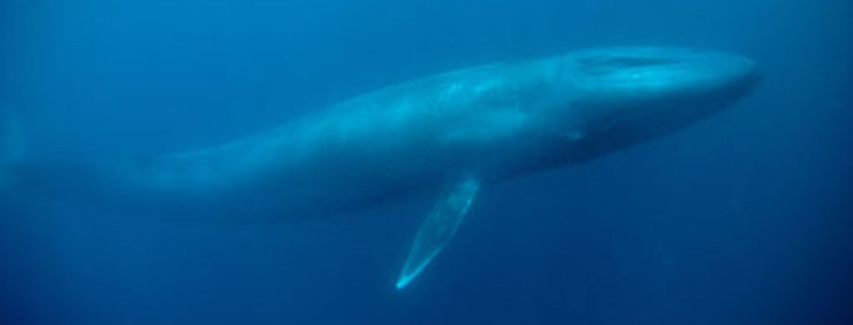 ballena featured